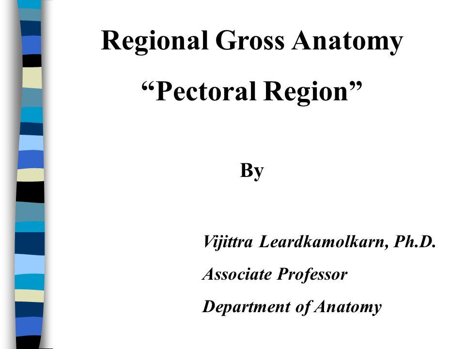 Pectoral region 1.