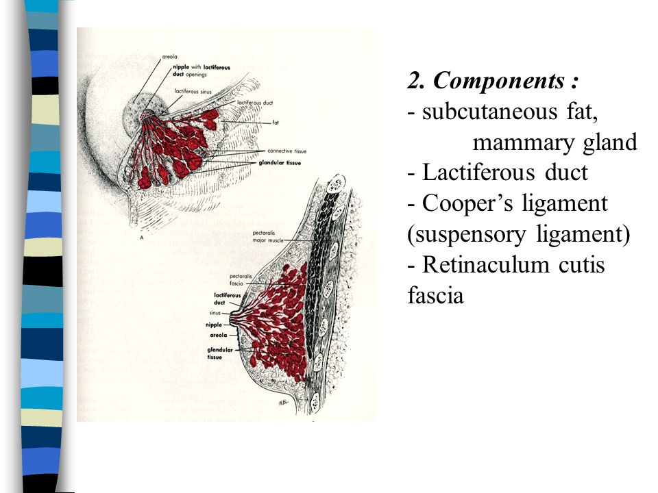 Axillary lymph nodes - divided into 6 groups: 1.Anterior group 2.