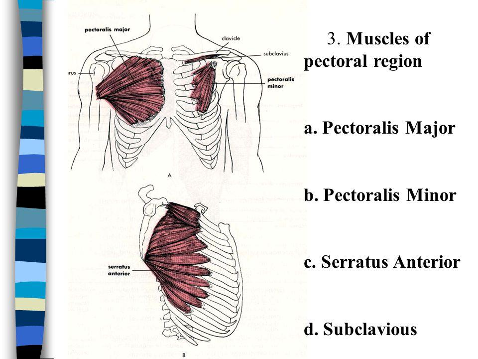 a.Pectoralis Major O. middle ½ clavicle, sternum, rib 1-5 I.