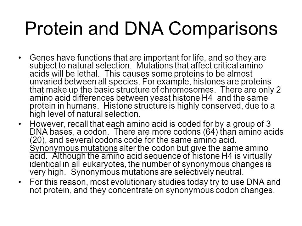 Protein and DNA Comparisons Genes have functions that are important for life, and so they are subject to natural selection. Mutations that affect crit