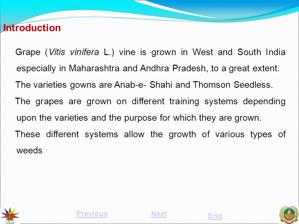Grape (Vitis vinifera L.) vine is grown in West and South India especially in Maharashtra and Andhra Pradesh, to a great extent. The varieties gowns a