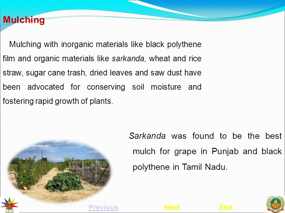 Mulching Mulching with inorganic materials like black polythene film and organic materials like sarkanda, wheat and rice straw, sugar cane trash, dried leaves and saw dust have been advocated for conserving soil moisture and fostering rapid growth of plants.