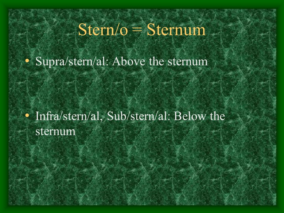Stern/o = Sternum Supra/stern/al: Above the sternum Infra/stern/al, Sub/stern/al: Below the sternum