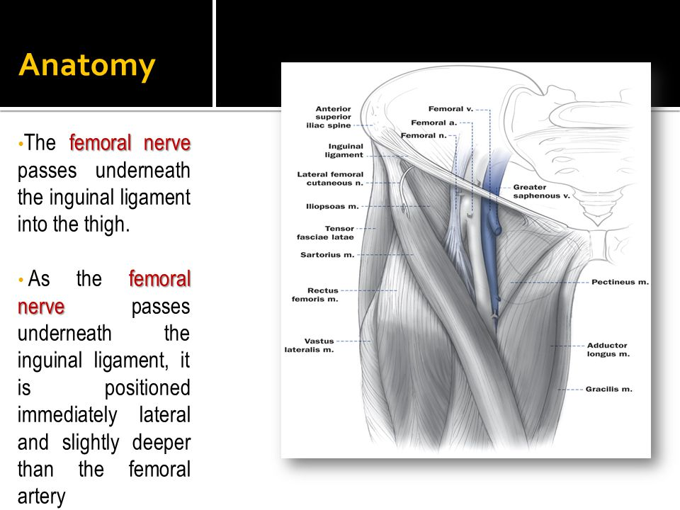 Anatomy femoral nerve The femoral nerve passes underneath the inguinal ligament into the thigh. femoral nerve As the femoral nerve passes underneath t