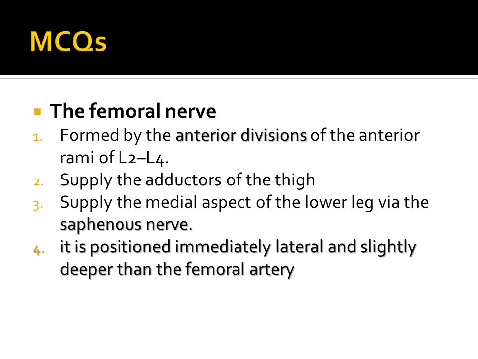  The femoral nerve anterior divisions 1. Formed by the anterior divisions of the anterior rami of L2–L4. 2. Supply the adductors of the thigh sapheno