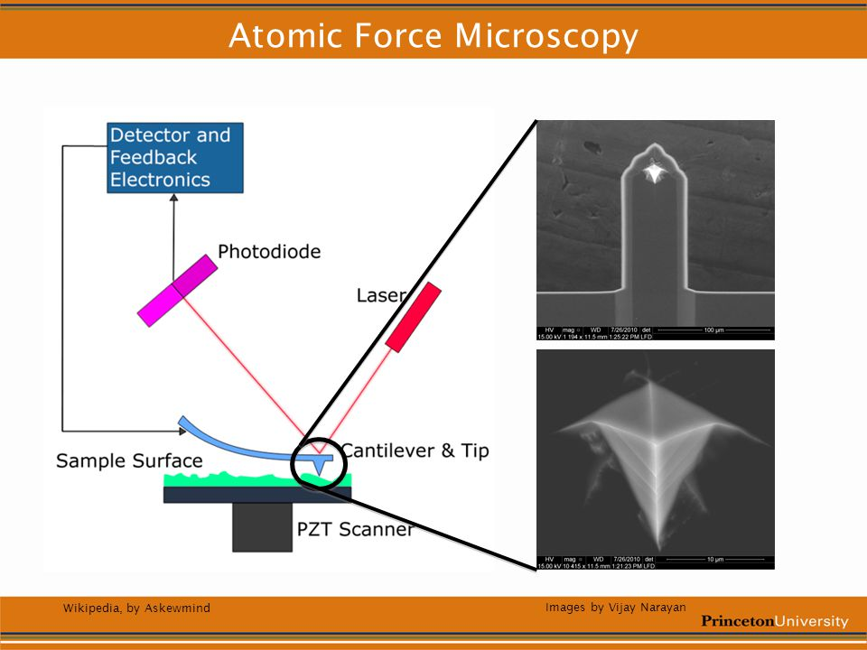Atomic Force Microscopy Wikipedia, by Askewmind Images by Vijay Narayan