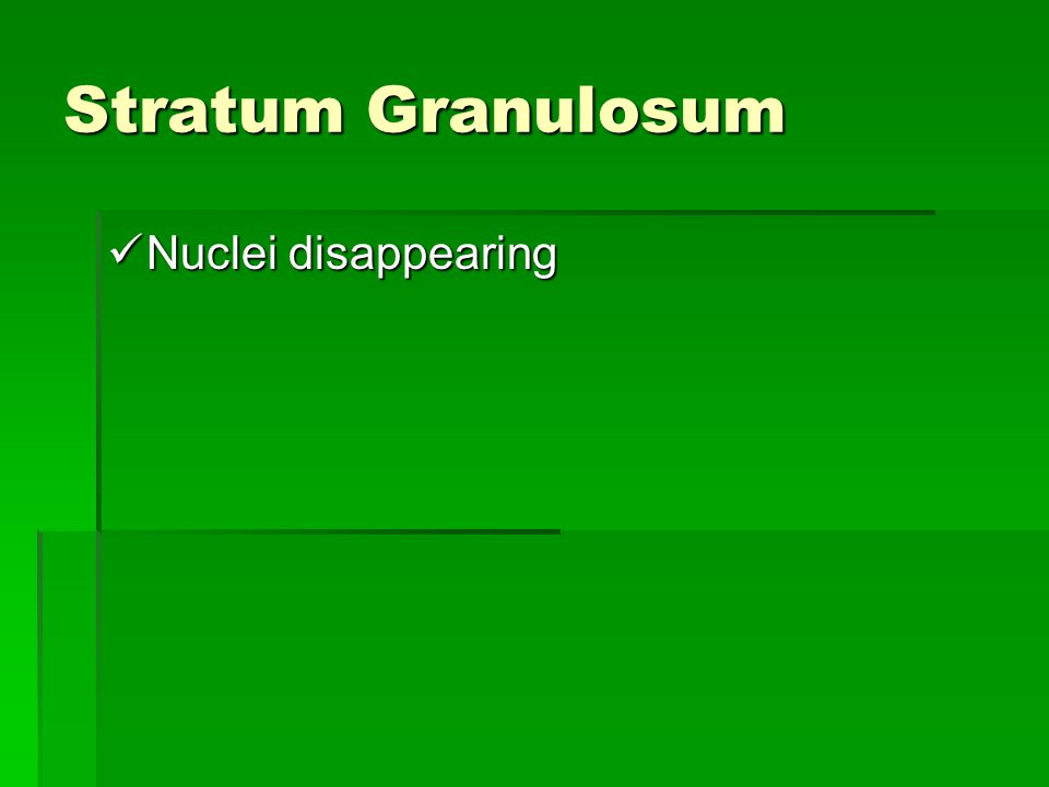 Stratum Granulosum Nuclei disappearing Nuclei disappearing