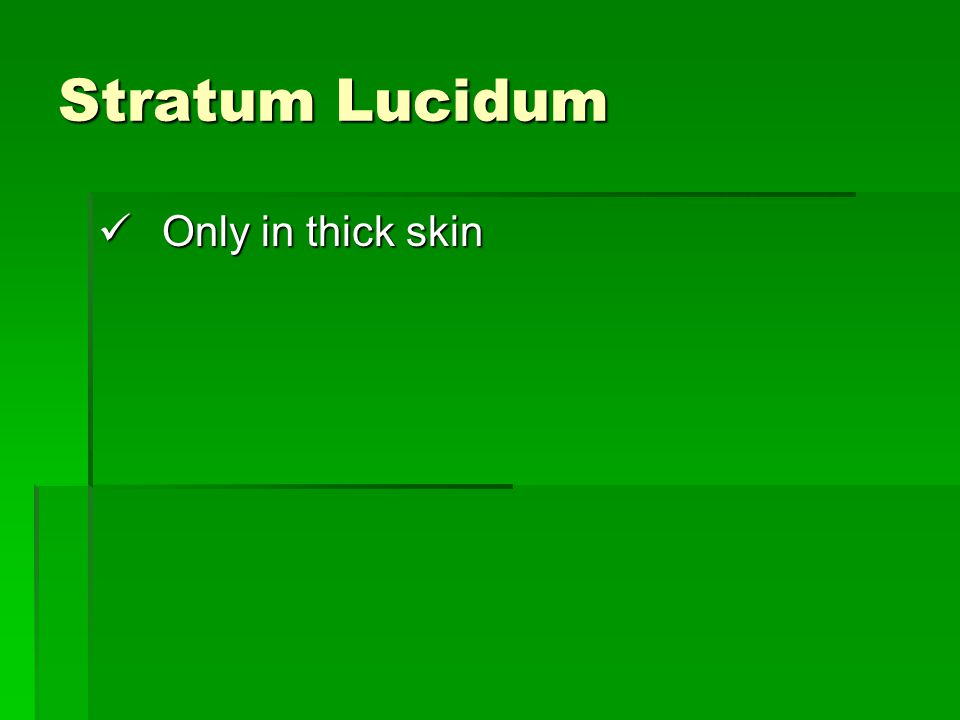 Stratum Lucidum Only in thick skin Only in thick skin