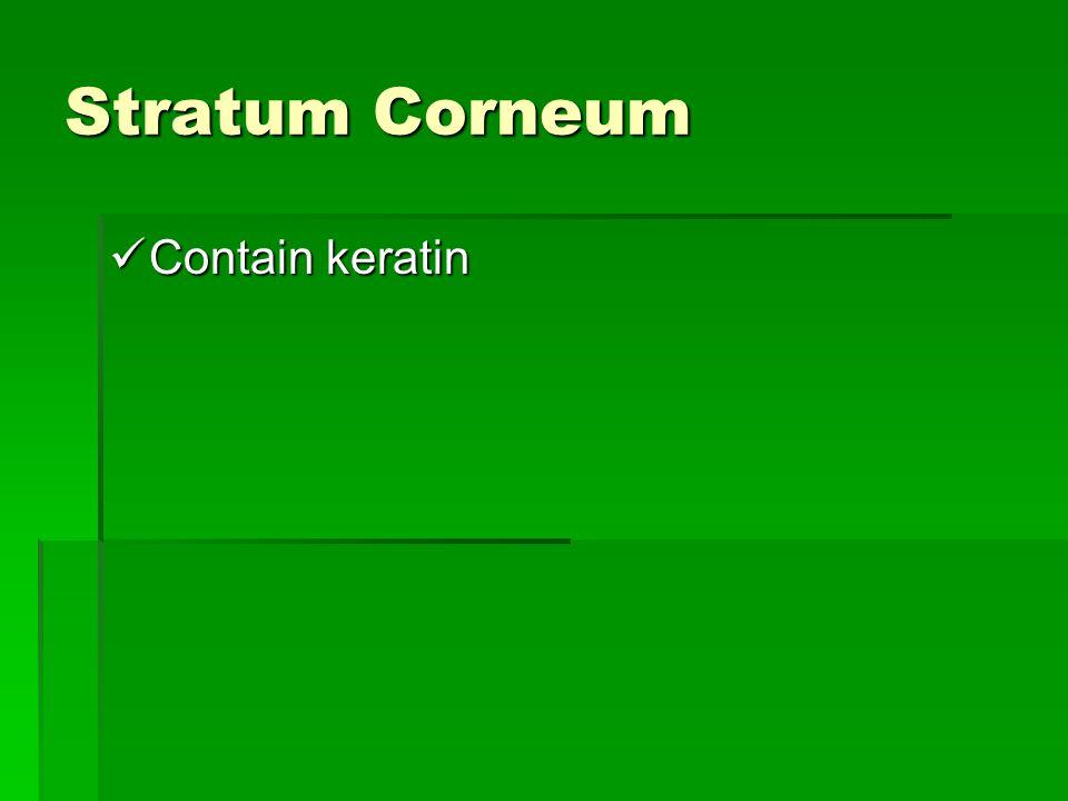 Stratum Corneum Contain keratin Contain keratin