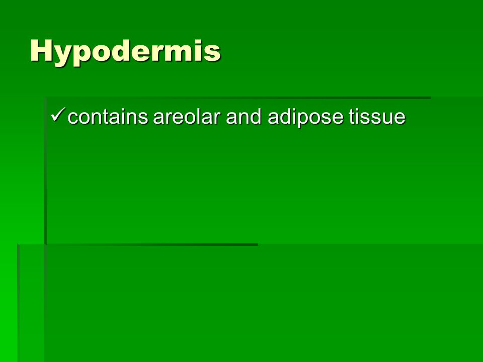 Hypodermis contains areolar and adipose tissue contains areolar and adipose tissue