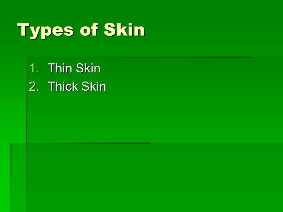 Types of Skin 1.Thin Skin 2.Thick Skin