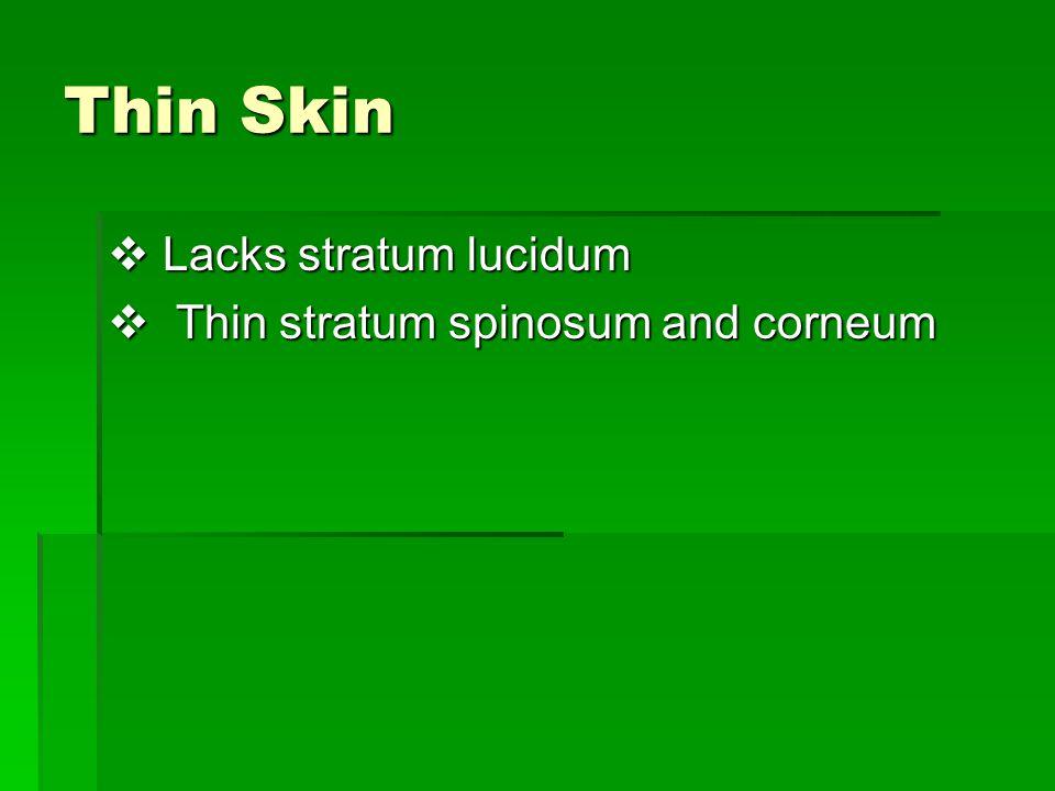 Thin Skin  Lacks stratum lucidum  Thin stratum spinosum and corneum