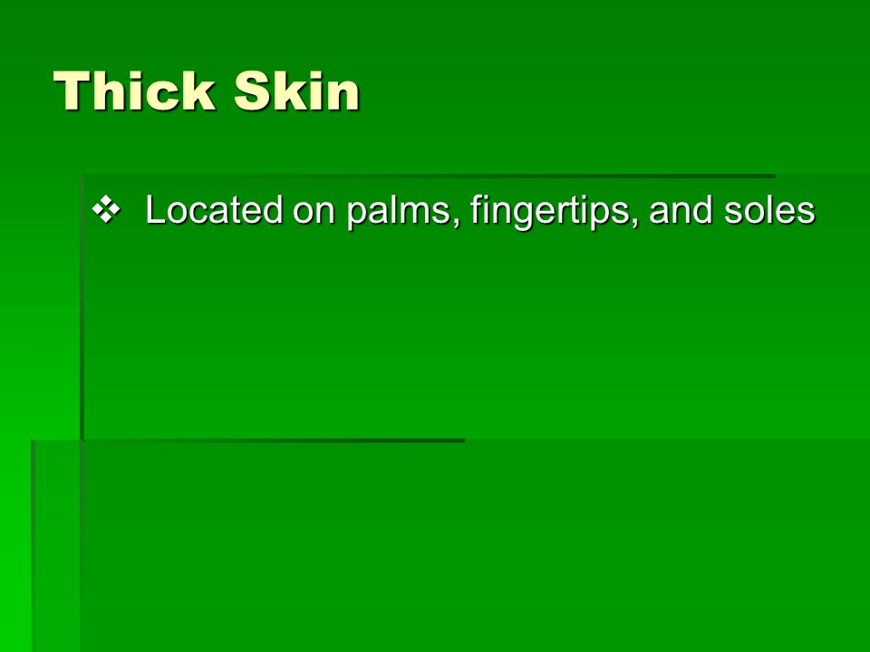 Thick Skin  Located on palms, fingertips, and soles