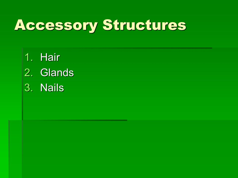 Accessory Structures 1.Hair 2.Glands 3.Nails