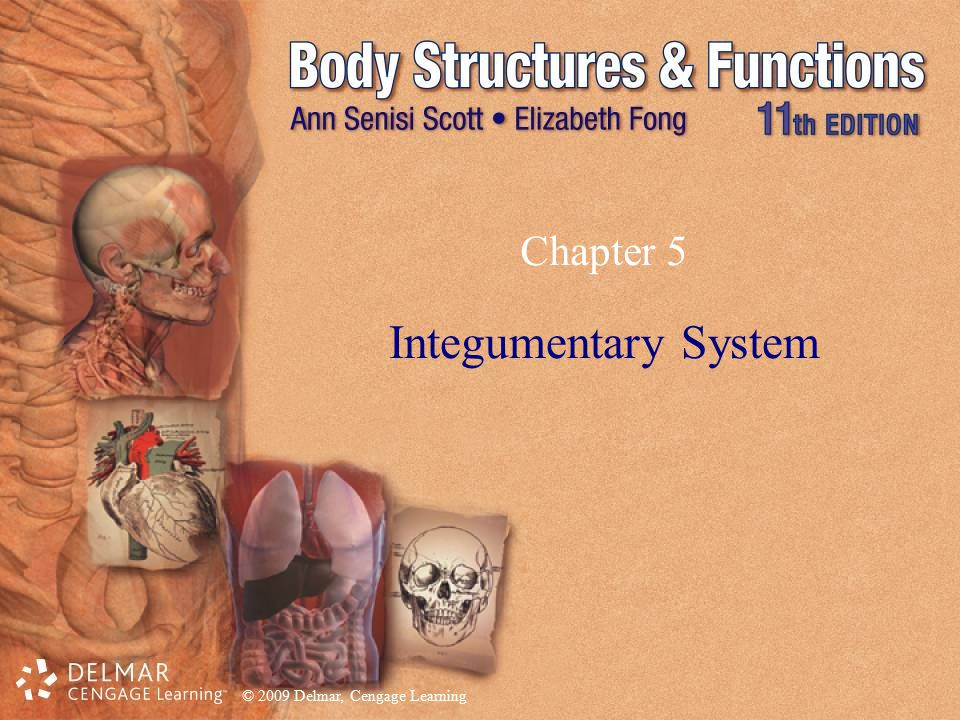 © 2009 Delmar, Cengage Learning Chapter 5 Integumentary System