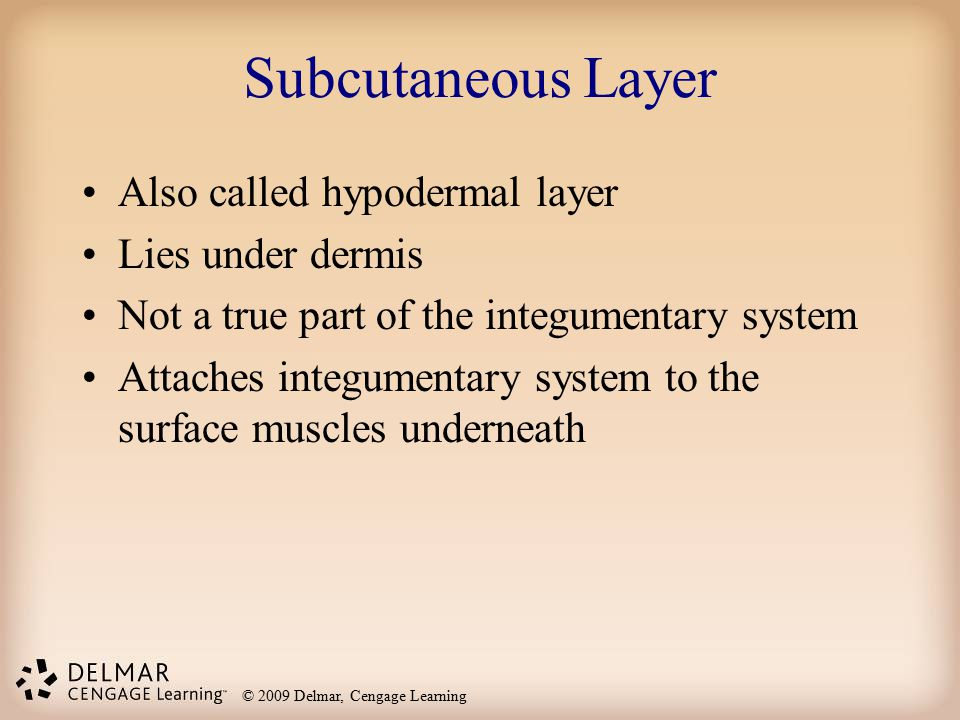 © 2009 Delmar, Cengage Learning Subcutaneous Layer Also called hypodermal layer Lies under dermis Not a true part of the integumentary system Attaches