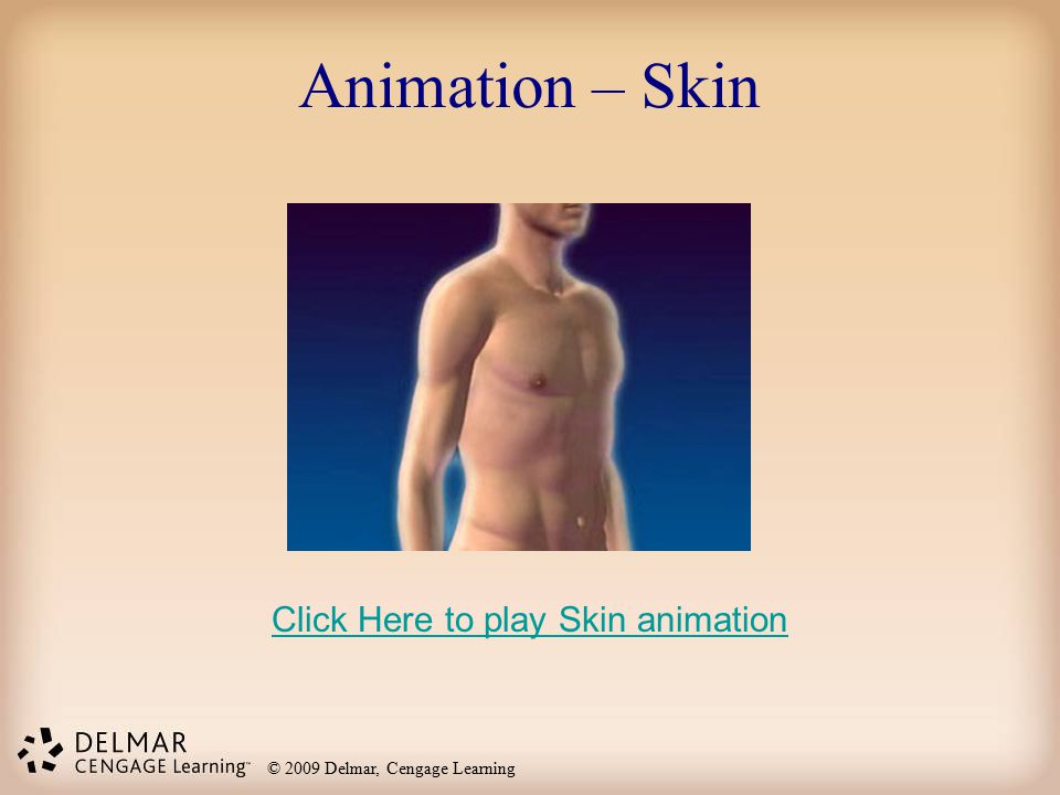 © 2009 Delmar, Cengage Learning Animation – Skin Click Here to play Skin animation
