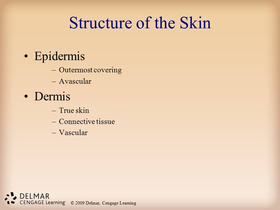 © 2009 Delmar, Cengage Learning Structure of the Skin Epidermis –Outermost covering –Avascular Dermis –True skin –Connective tissue –Vascular