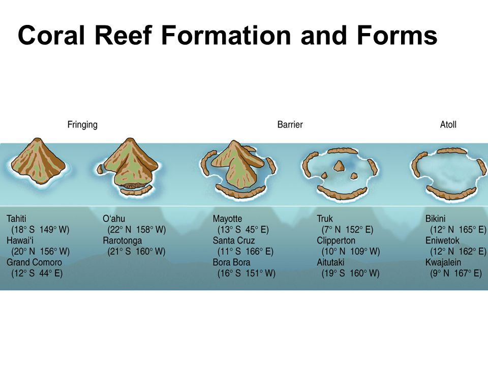 Coral Reef Formation and Forms