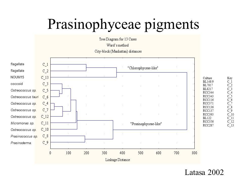 Prasinophyceae pigments CultureKey BL148/9C_1 BL7817C_2 BL8217C_3 RCC344C_4 RCC343C_5 RCC116C_6 RCC371C_7 RCC136C_8 RCC137C_9 RCC393C_10 BL122C_11 RCC356C_12 RCC287C_13 Latasa 2002 Ostreococcus sp.