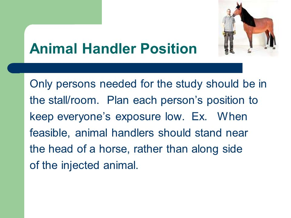 Animal Handler Position Only persons needed for the study should be in the stall/room. Plan each person's position to keep everyone's exposure low. Ex