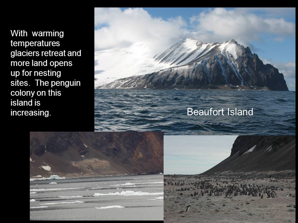 With warming temperatures glaciers retreat and more land opens up for nesting sites.