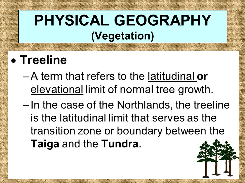 PHYSICAL GEOGRAPHY (Vegetation)  Treeline –A term that refers to the latitudinal or elevational limit of normal tree growth.