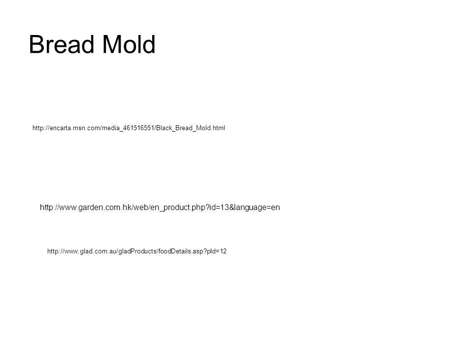 Bread Mold http://encarta.msn.com/media_461516551/Black_Bread_Mold.html http://www.garden.com.hk/web/en_product.php id=13&language=en http://www.glad.com.au/gladProducts/foodDetails.asp pId=12