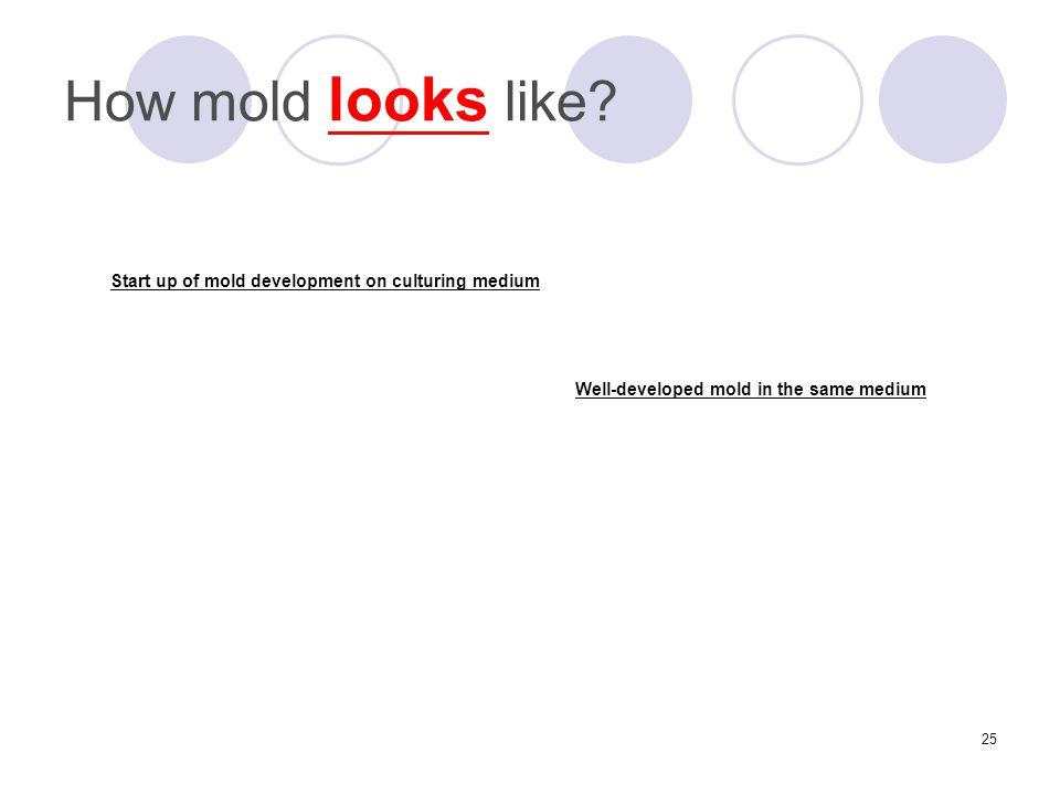 25 How mold looks like.