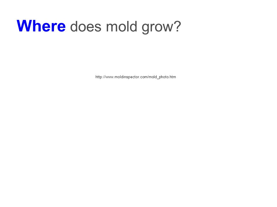 Where does mold grow? http://www.moldinspector.com/mold_photo.htm