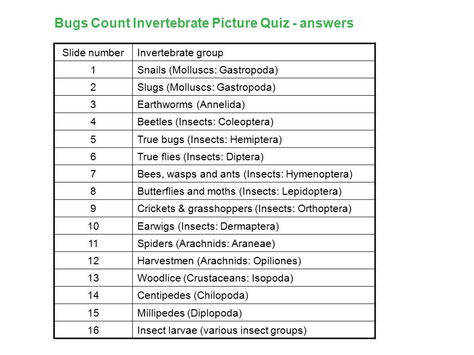Bugs Count Invertebrate Picture Quiz - answers Slide numberInvertebrate group 1Snails (Molluscs: Gastropoda) 2Slugs (Molluscs: Gastropoda) 3Earthworms (Annelida) 4Beetles (Insects: Coleoptera) 5True bugs (Insects: Hemiptera) 6True flies (Insects: Diptera) 7Bees, wasps and ants (Insects: Hymenoptera) 8Butterflies and moths (Insects: Lepidoptera) 9Crickets & grasshoppers (Insects: Orthoptera) 10Earwigs (Insects: Dermaptera) 11Spiders (Arachnids: Araneae) 12Harvestmen (Arachnids: Opiliones) 13Woodlice (Crustaceans: Isopoda) 14Centipedes (Chilopoda) 15Millipedes (Diplopoda) 16Insect larvae (various insect groups)