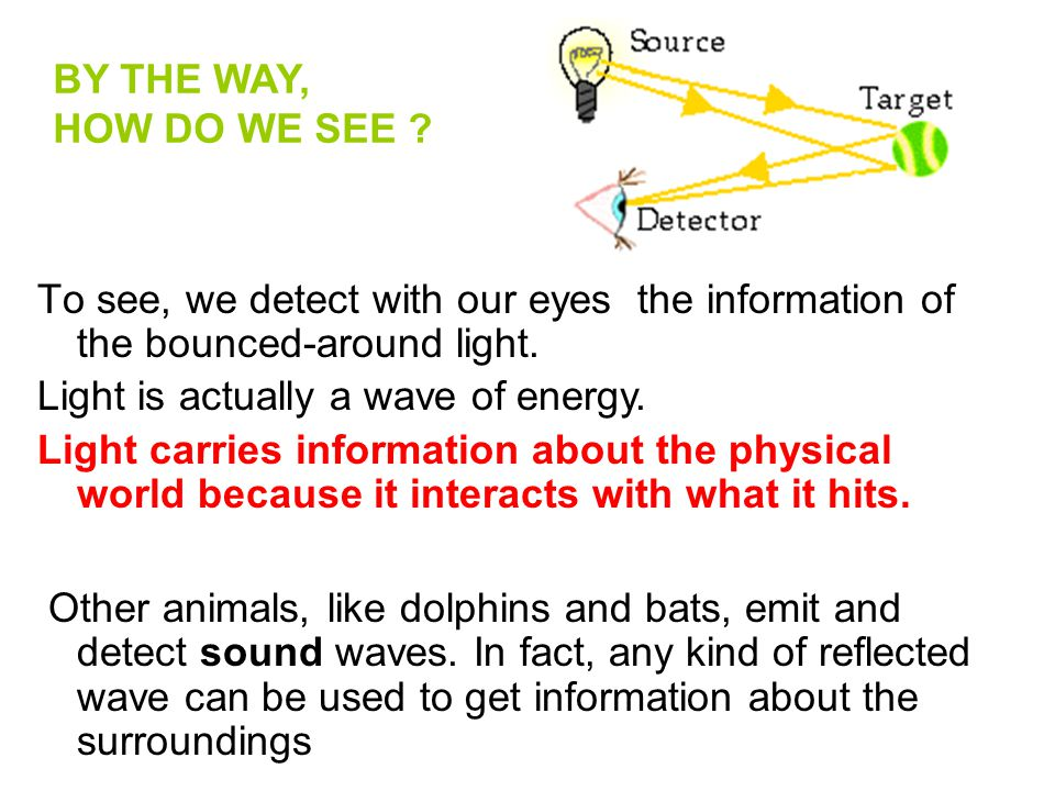 To see, we detect with our eyes the information of the bounced-around light. BY THE WAY, HOW DO WE SEE ? Light is actually a wave of energy. Light car