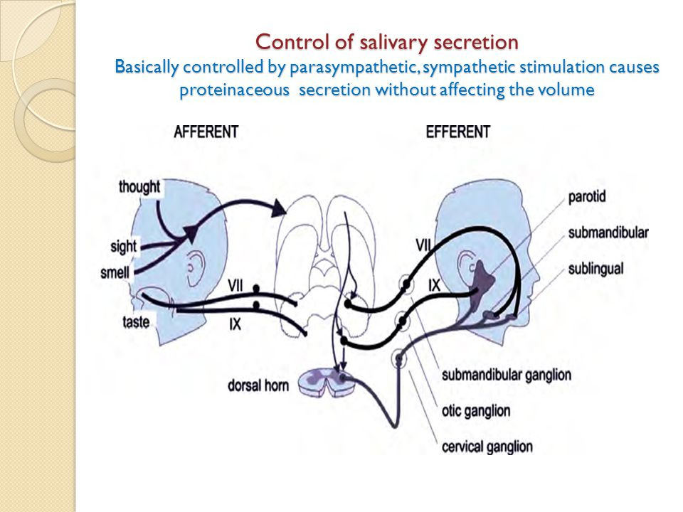 Control of salivary secretion Basically controlled by parasympathetic, sympathetic stimulation causes proteinaceous secretion without affecting the volume