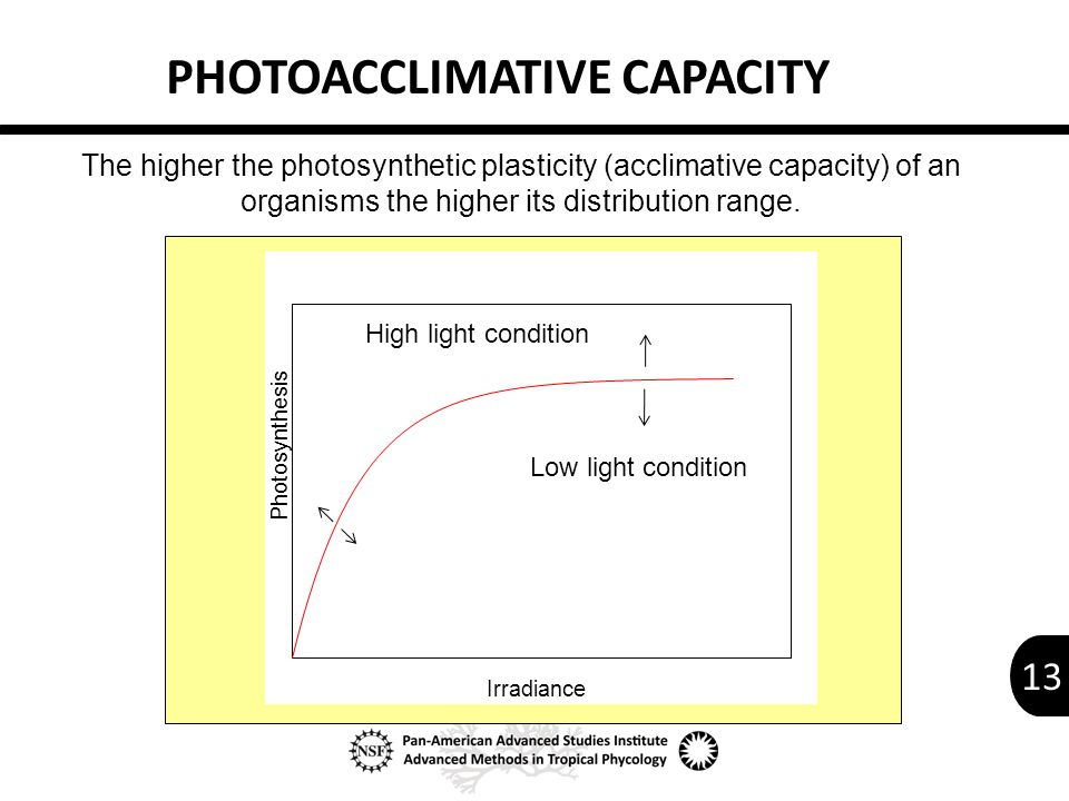 13 X Data PHOTOACCLIMATIVE CAPACITY Irradiance Photosynthesis The higher the photosynthetic plasticity (acclimative capacity) of an organisms the higher its distribution range.