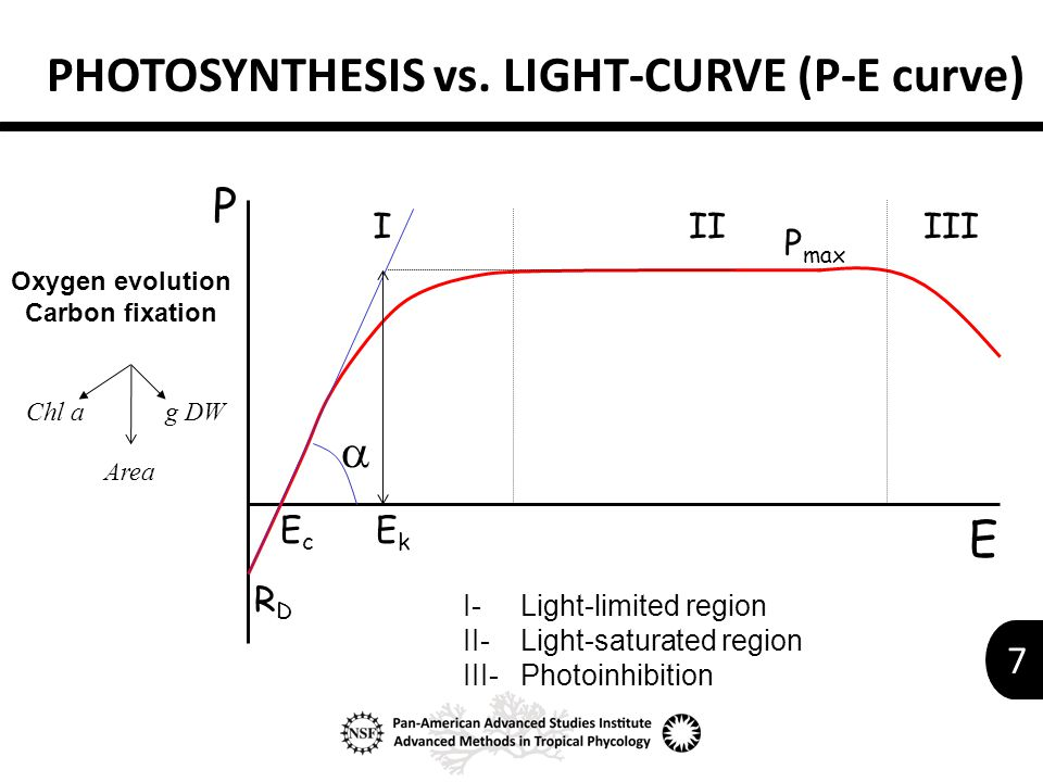 7 PHOTOSYNTHESIS vs.