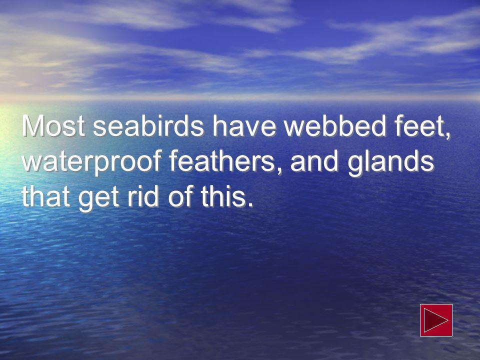 What are plastics/marine debris.