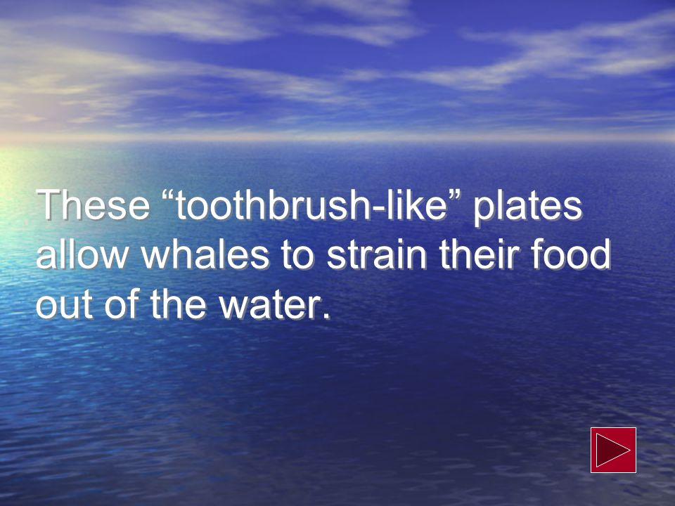 What is cetacean 200 Credit: NOAA http://www.nmfs.noaa.gov/pr/species/mammals/cetacea ns/