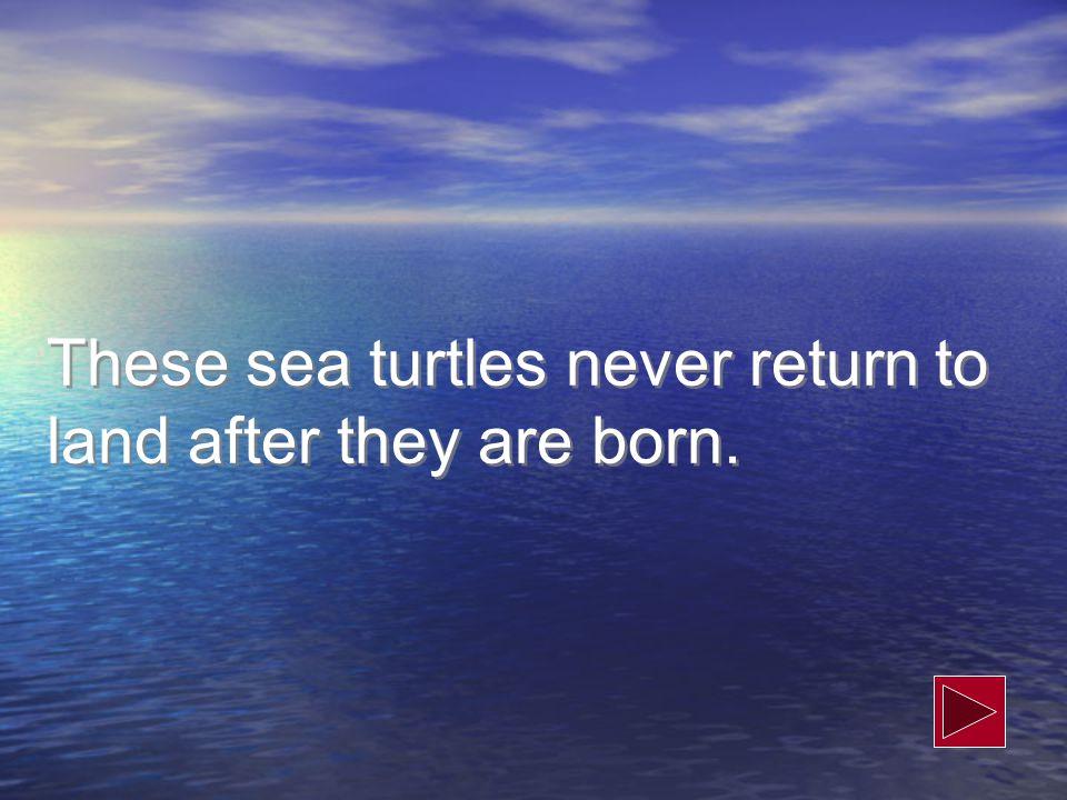 Sea Turtles Sea Birds Seals Sea Lions Walruses Whales Dolphins Porpoises 300 500 400 100 300 100 200 100 300 200 300 400 500 400 500 400 100 200 100 300 200 500 400 200 National Marine Sanctuary