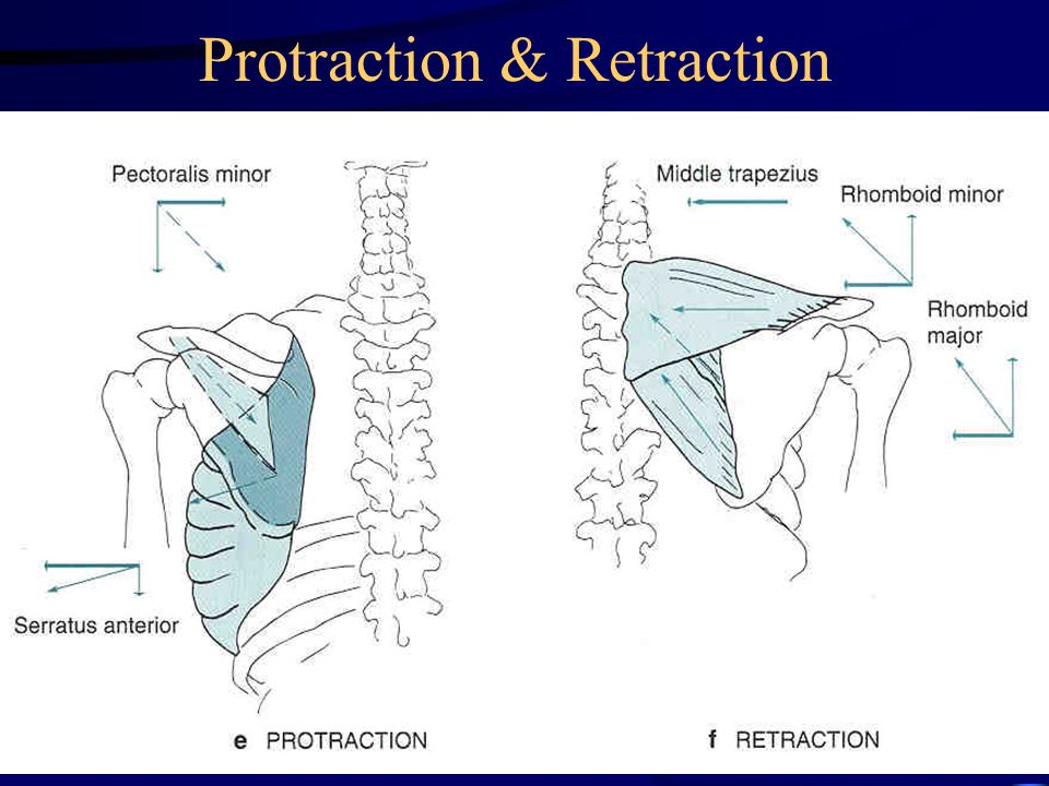Protraction & Retraction