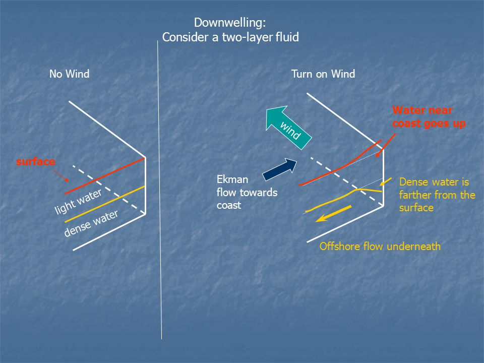 light water dense water No WindTurn on Wind wind Downwelling: Consider a two-layer fluid Ekman flow towards coast surface Water near coast goes up Offshore flow underneath Dense water is farther from the surface