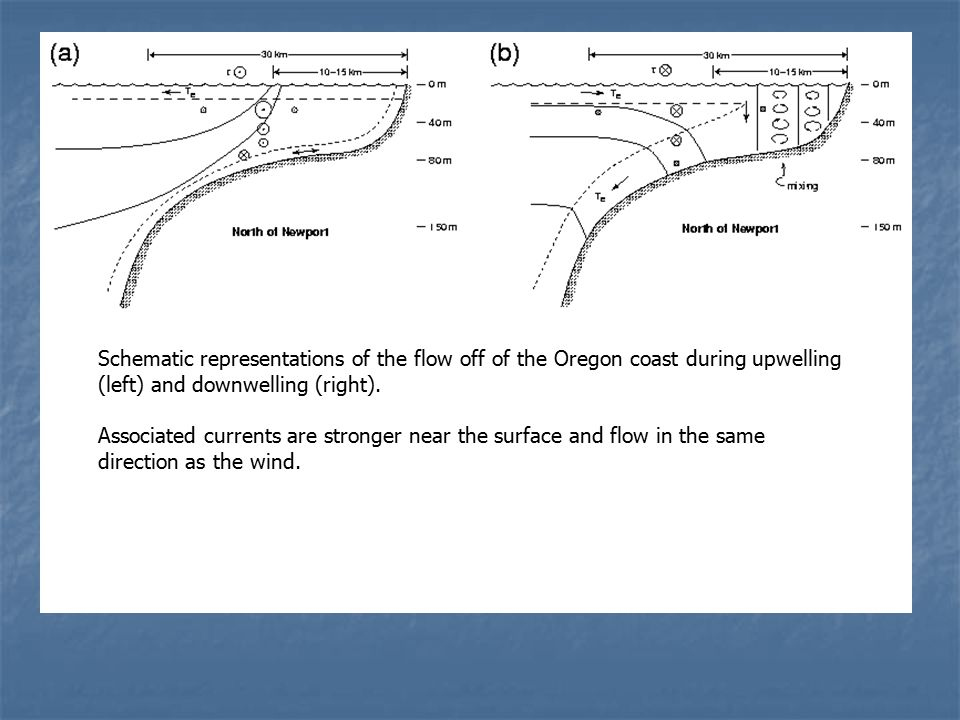 Schematic representations of the flow off of the Oregon coast during upwelling (left) and downwelling (right).