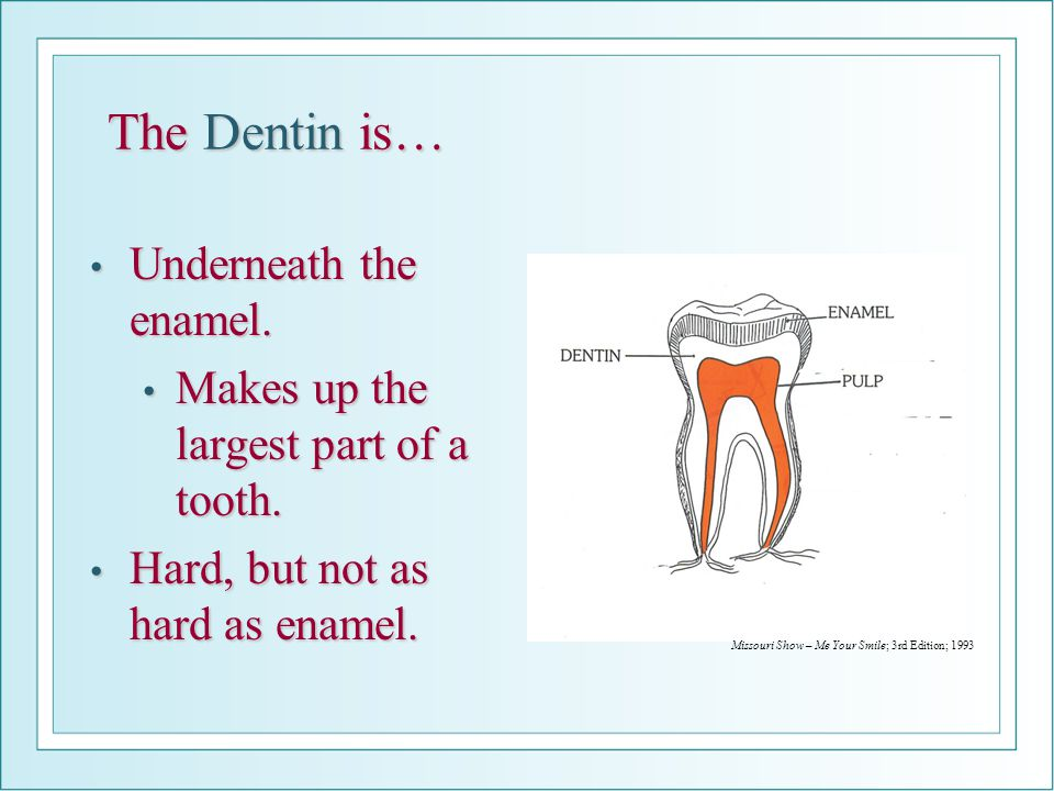 The Dentin is… Underneath the enamel. Underneath the enamel. Makes up the largest part of a tooth. Makes up the largest part of a tooth. Hard, but not