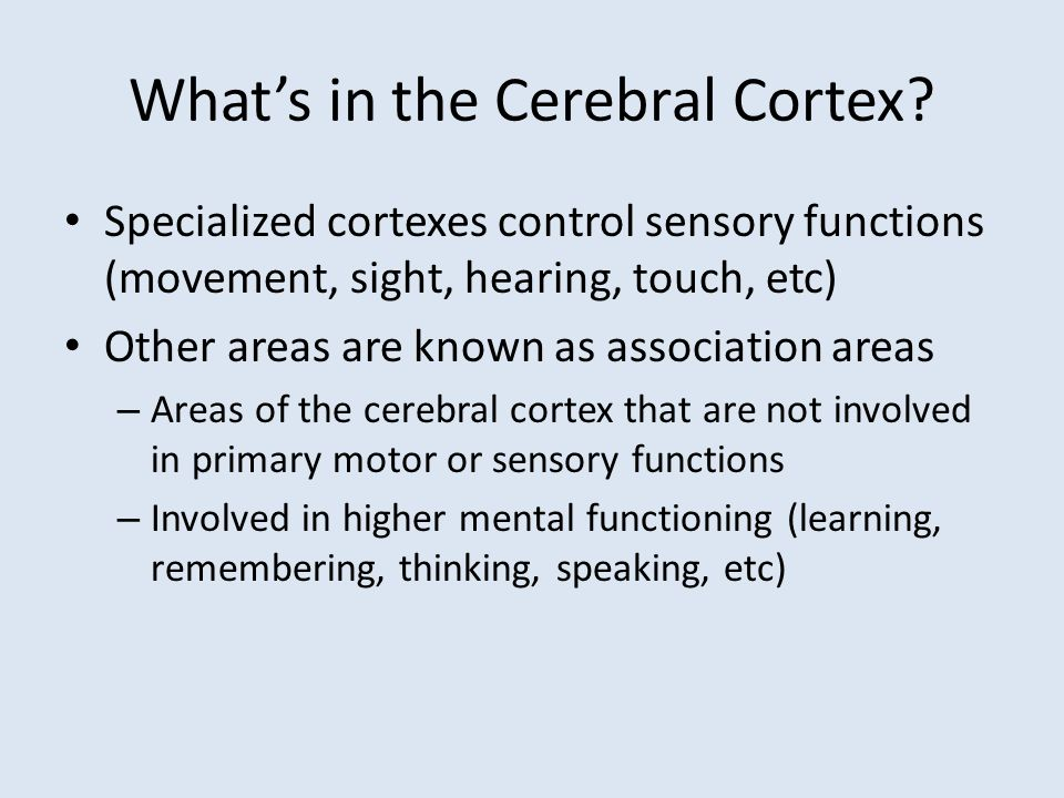 What's in the Cerebral Cortex? Specialized cortexes control sensory functions (movement, sight, hearing, touch, etc) Other areas are known as associat