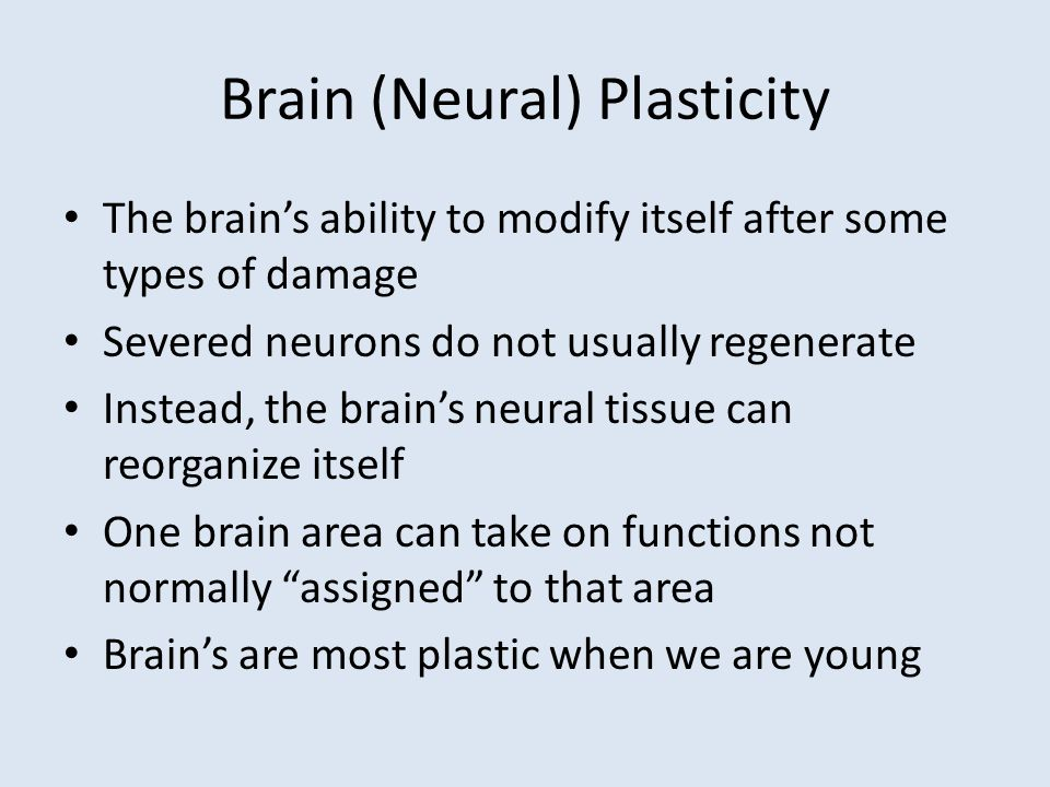 Brain (Neural) Plasticity The brain's ability to modify itself after some types of damage Severed neurons do not usually regenerate Instead, the brain