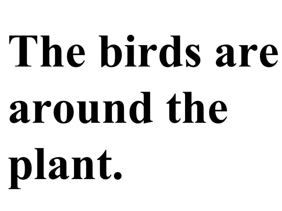 The birds are around the plant.