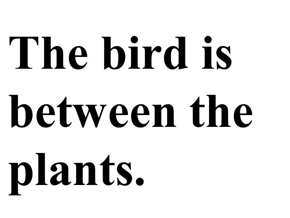 The bird is between the plants.