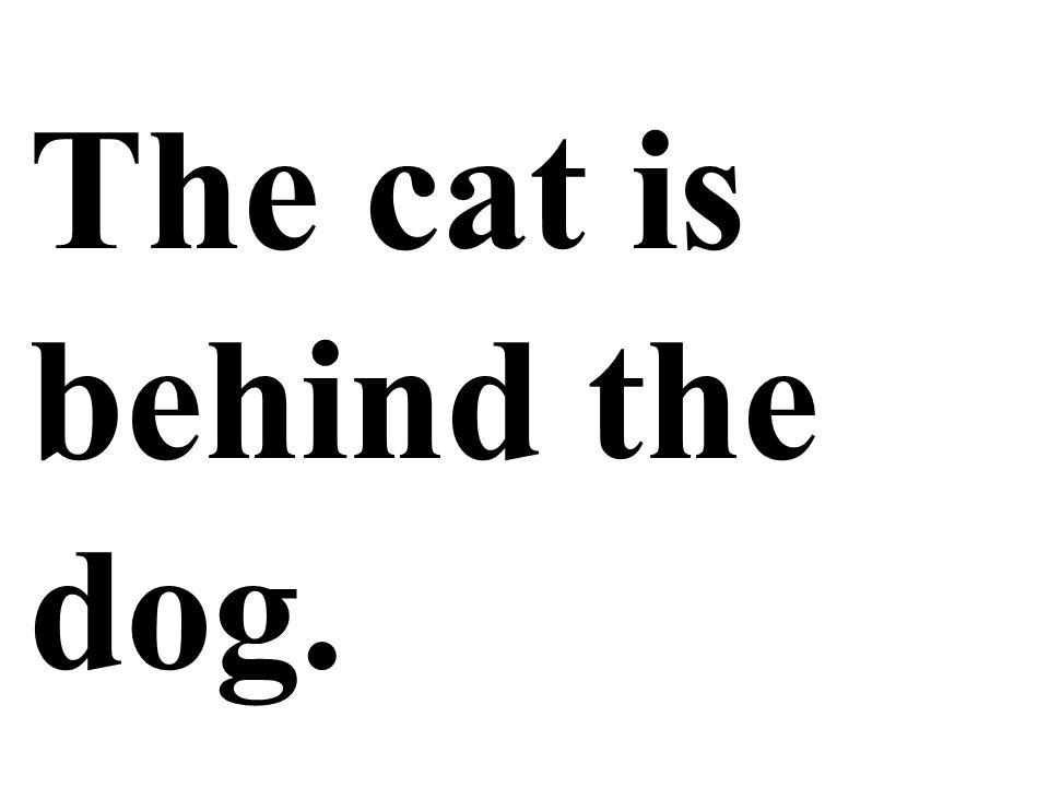 The cat is behind the dog.