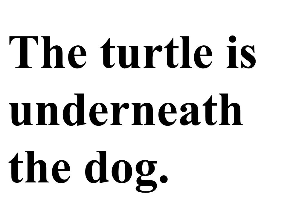 The turtle is underneath the dog.