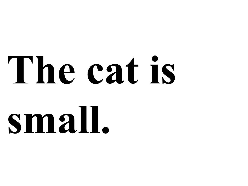 The cat is small.