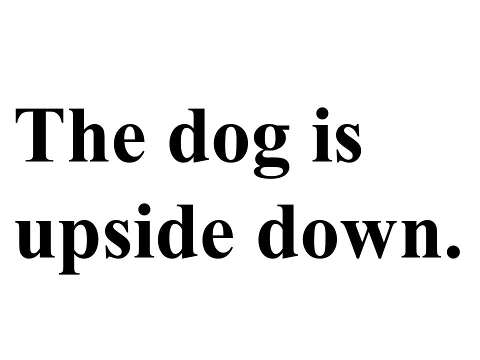 The dog is upside down.